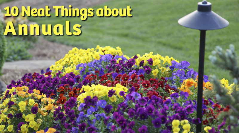 10 neat things about annuals