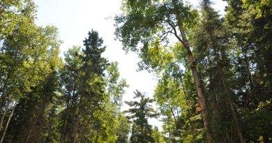 how trees talk nature