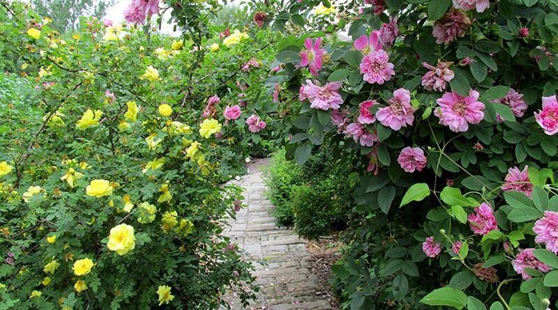 Ontario rose garden