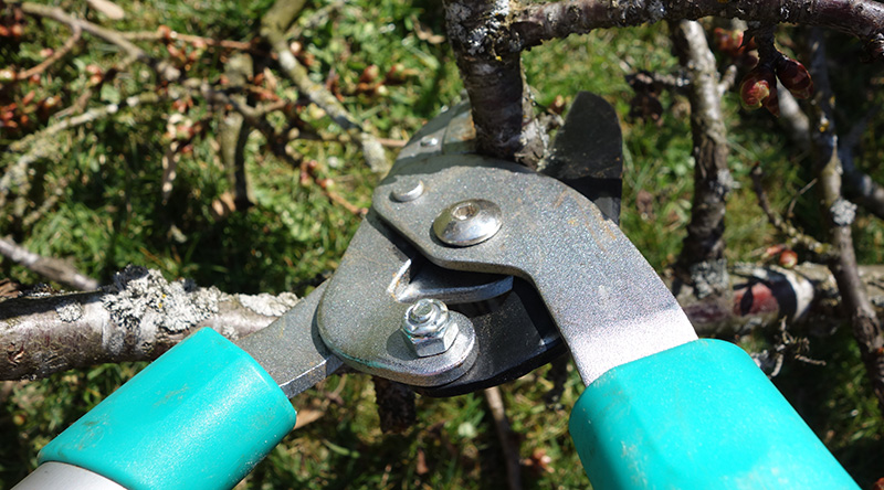 pruning shrubs shears