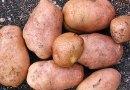 Sidebar: More about Potatoes