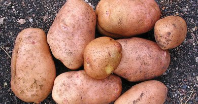 more about potatoes