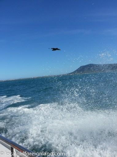 sharkcagediving-2