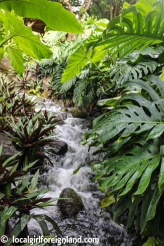 Jardin Botanique de Deshaies Guadeloupe-2073