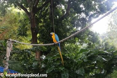 Jardin Botanique de Deshaies Guadeloupe-2146