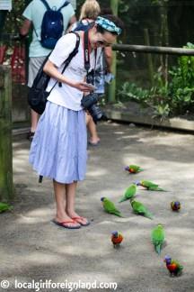 Jardin Botanique de Deshaies Guadeloupe-4181