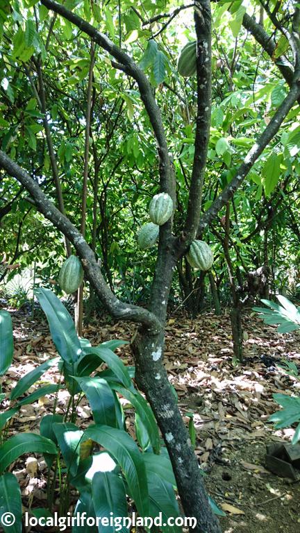 la-maison-du-cacao-guadeloupe-english-review-2239