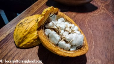 Cacao, the fruit