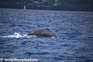 Les-Heures-Saines-Malendure-Guadeloupe-whale-watching-cruise-2403