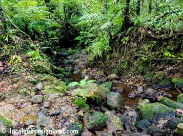 Chemin-du-Bassin-Bleu-Guadeloupe-133848