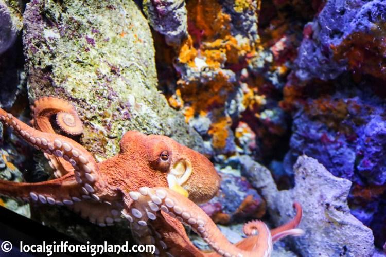 aquarium-guadeloupe-review-reopen-5243
