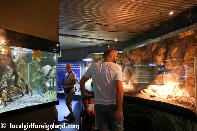 aquarium de la guadeloupe-2163.JPG