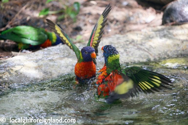 Jardin Botanique de Deshaies Guadeloupe-4364