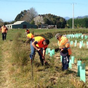 Tiakina planting