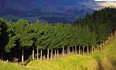 Plantation forestry rules: Gear up for change on May 1