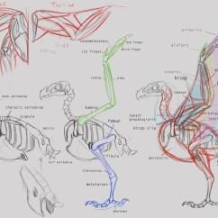 Eagle Anatomy Diagram Panasonic Cq Rx100u Wiring The