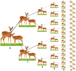 A single doe and her offspring over 5 years. Males are not shown.