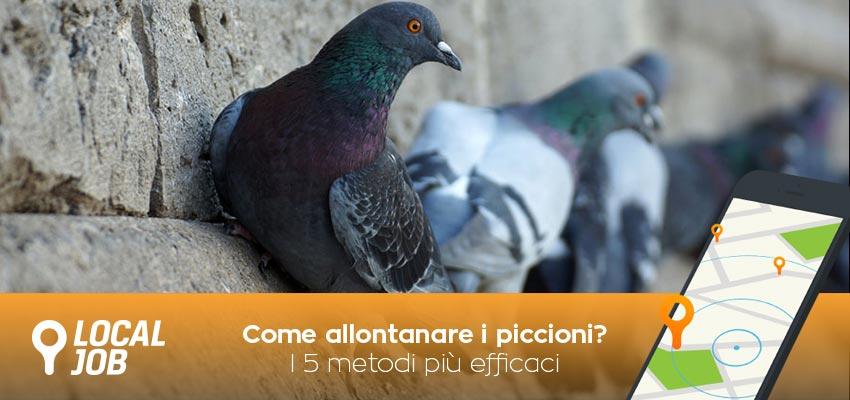 come-allontanare-i-piccioni.jpg