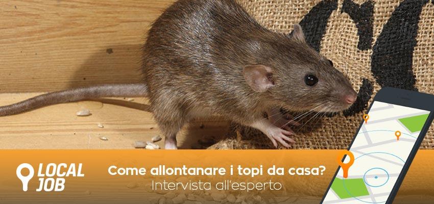 Tutti gli articoli con tag disinfestazione topi localjob - Come uccidere i topi in casa ...