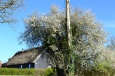 Spring blossom near Hever