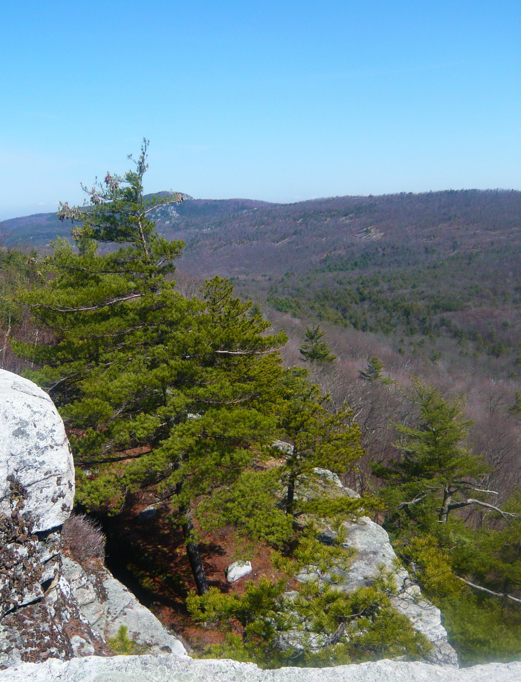 Appropos of nothing, the view from the top of Lost City from our hike in the Gunks yesterday.  Spring has sprung!