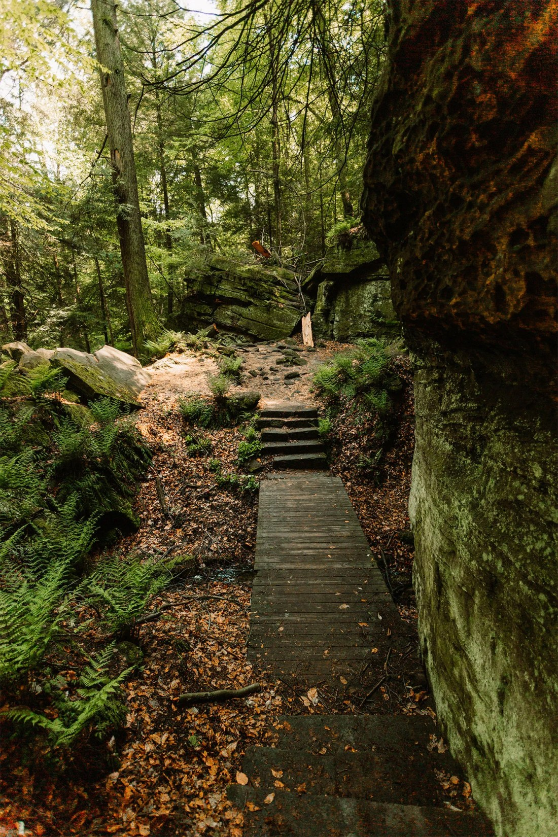 Trail between moss covered rocks