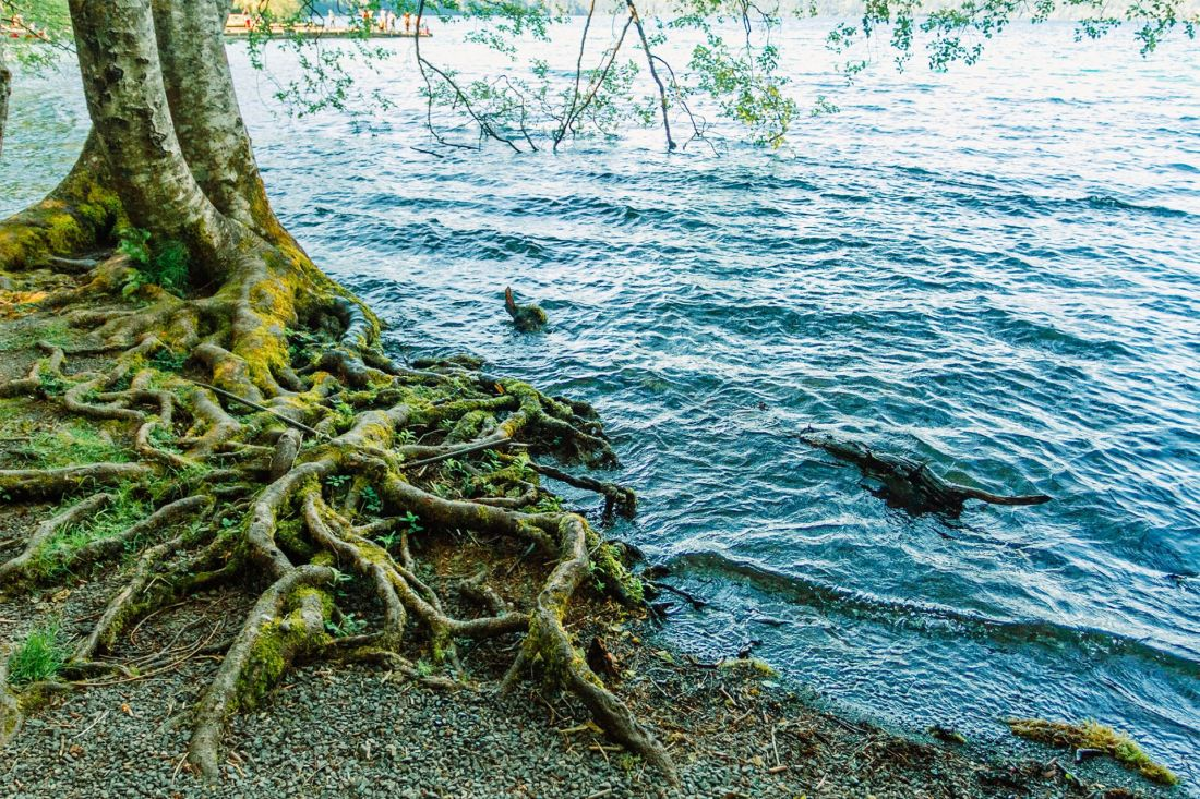 Crystal blue waters in Crescent Lake, Olympic National Park   Local Love and Wanderlust