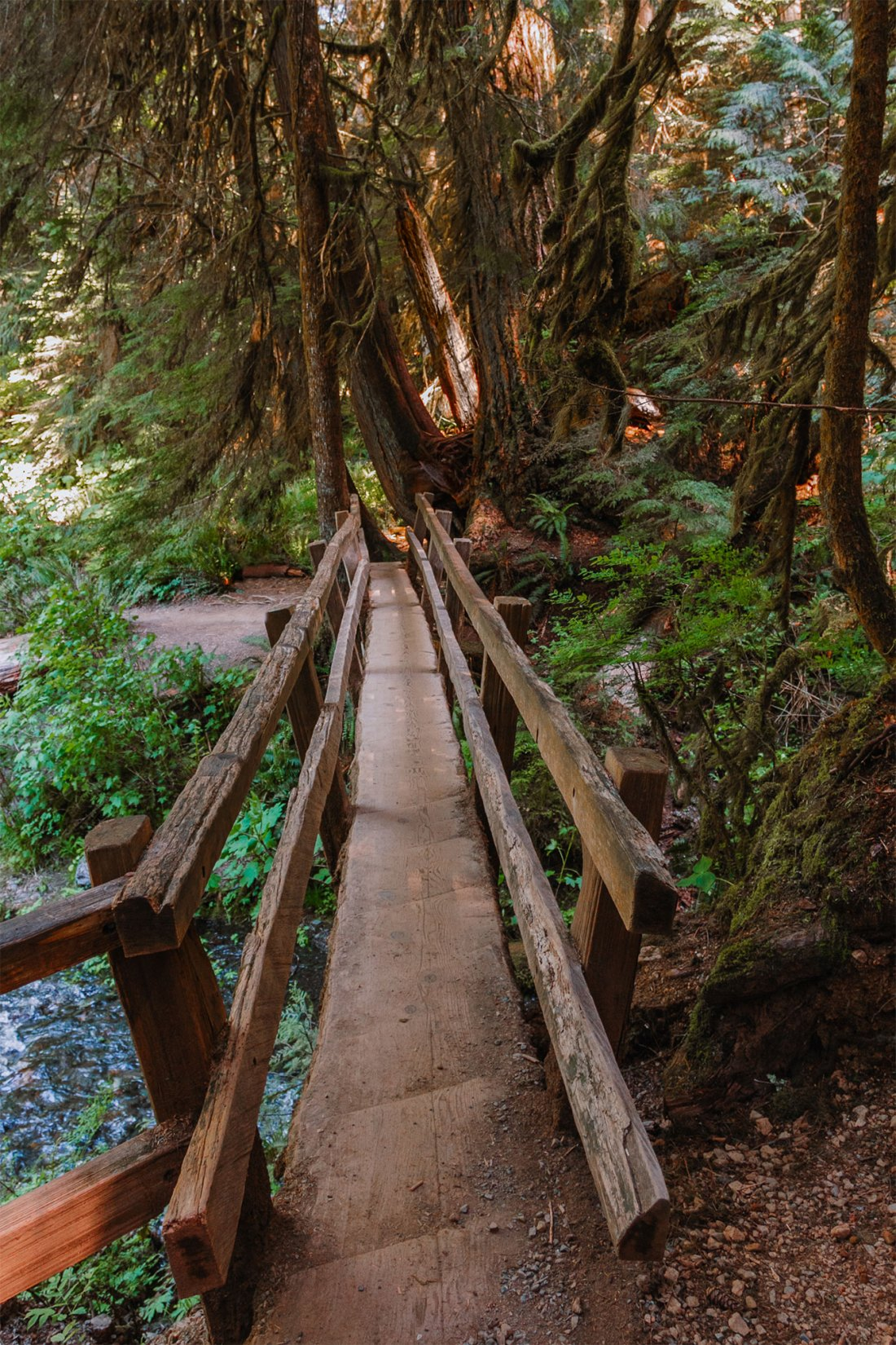 Bridge to Marymere Falls in Olympic National Park | Local Love and Wanderlust
