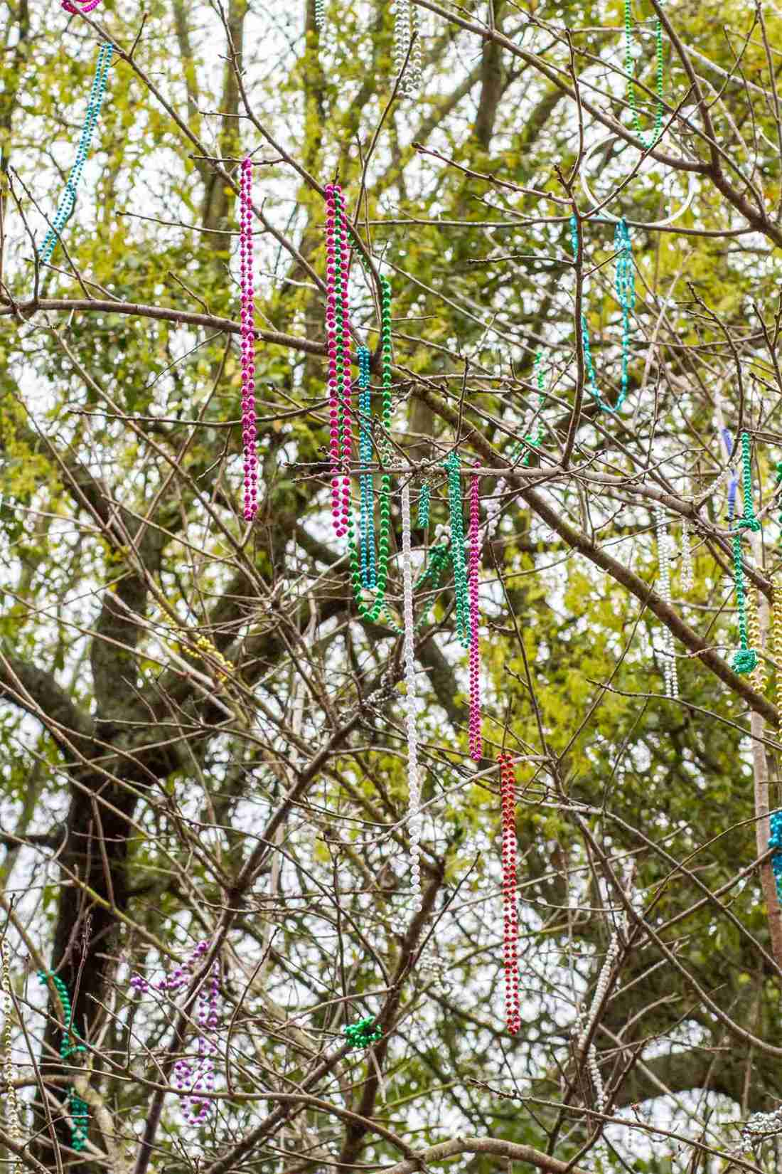 Tree with colorful Mardi Gras beads draping from it in New Orleans