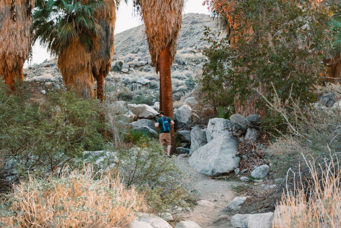 Man walking through palms in Indian Canyon Palm Springs