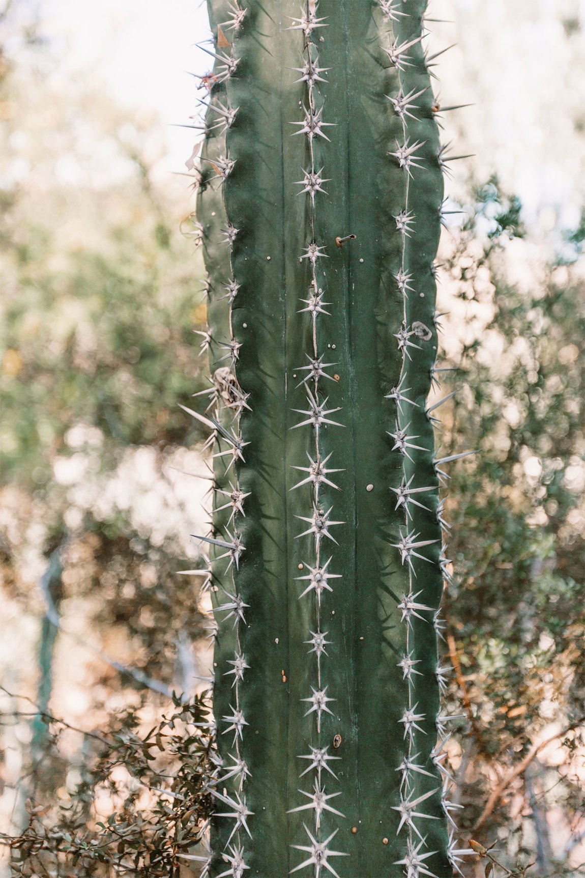 close up of prickers on a cactus plant