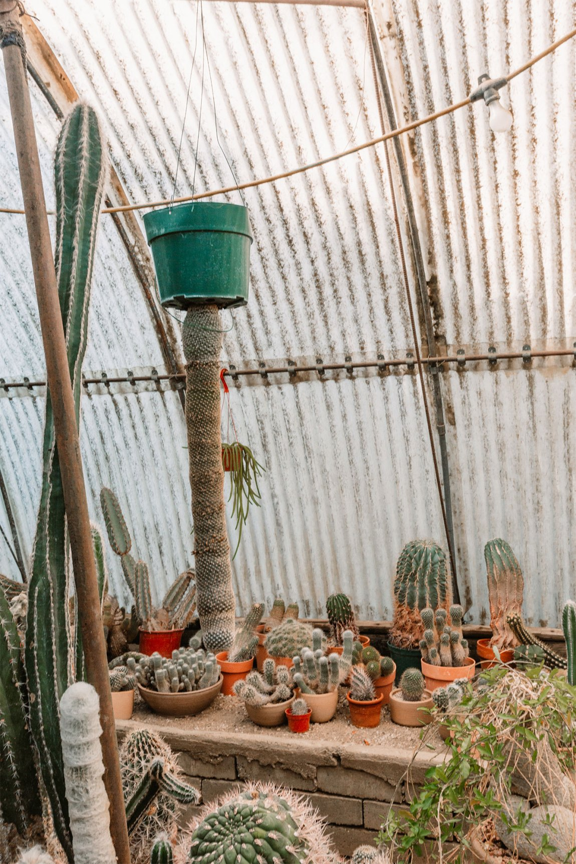 Terra cotta pots filled with a variety of green cactus plants