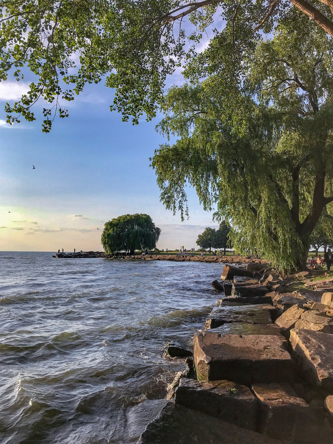 Willow Tree at Edgewater Park in Cleveland, Ohio on the shores of Lake Erie