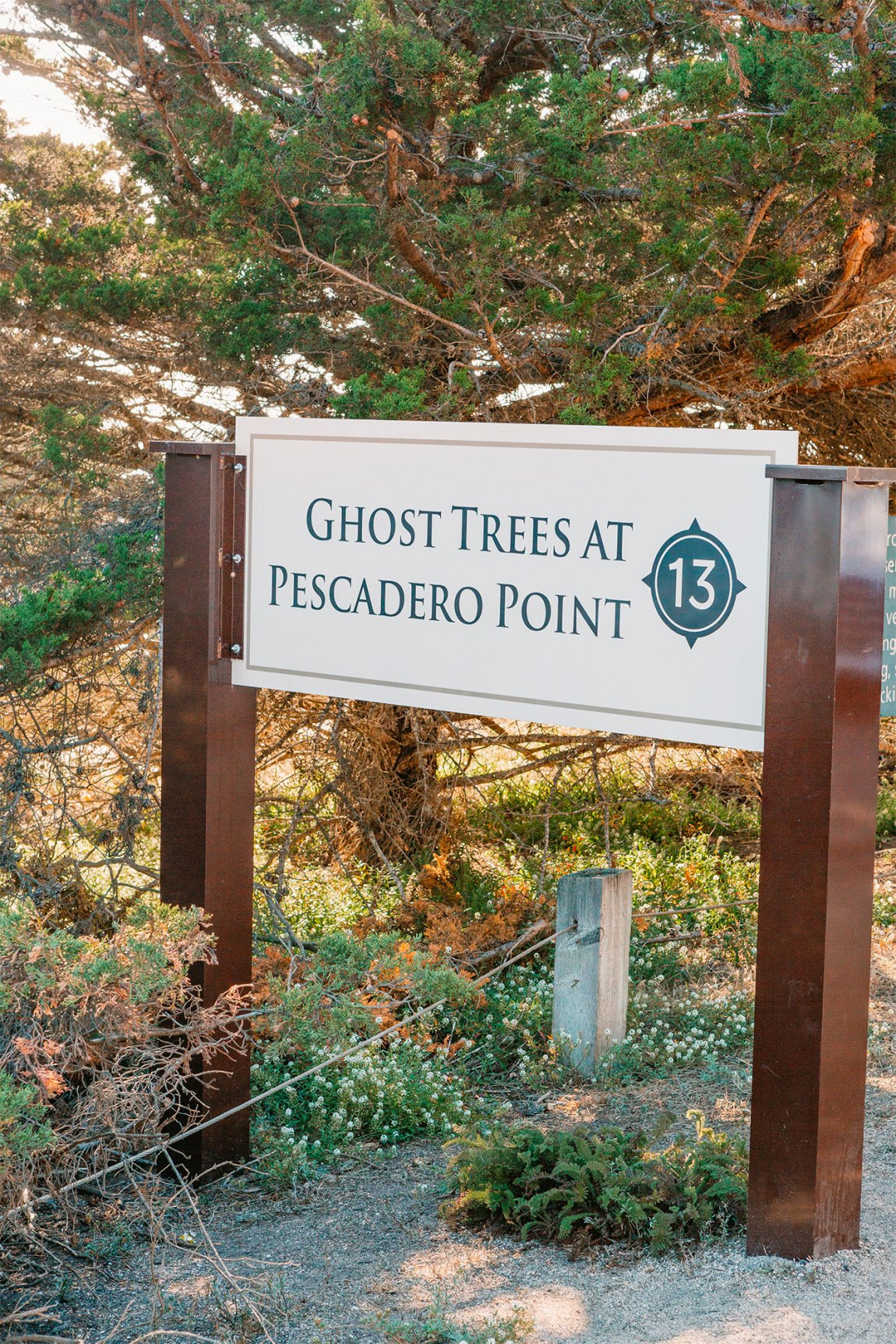 Ghost Trees on the 17-Mile Drive Monterey, California