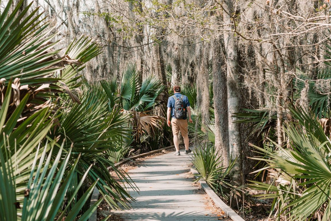 Man walking on wood trail through tropical swamp