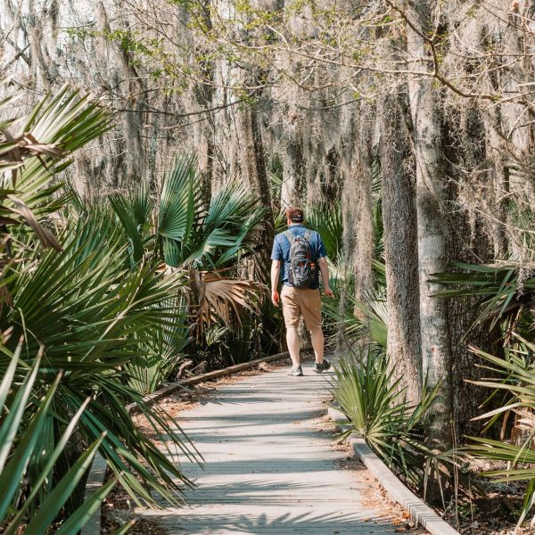 Walk Through The Swamp in Barataria Preserve Near New Orleans