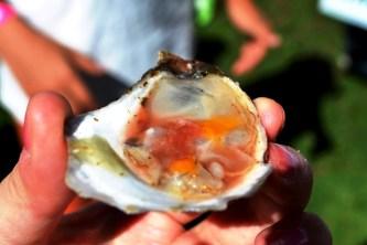 Organic Feast of Fields 2014 - Island Oysters