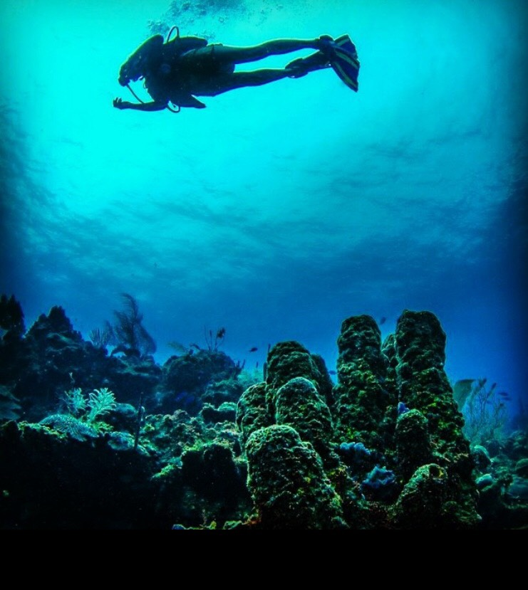 Florida's Top 5 Offshore Dive Sites: And How you Can Help Protect Them this November & Beyond