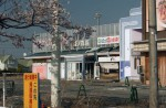 Famous sakura trees bloom in abandoned Fukushima town - 8