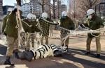 Tokyo zoo stages'zebra escape' - 1