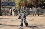 Tokyo zoo stages'zebra escape' - 12