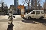 Tokyo zoo stages'zebra escape' - 13