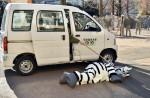 Tokyo zoo stages'zebra escape' - 14