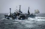 Japan keeps hunting whales - 1