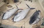 Japan keeps hunting whales - 9