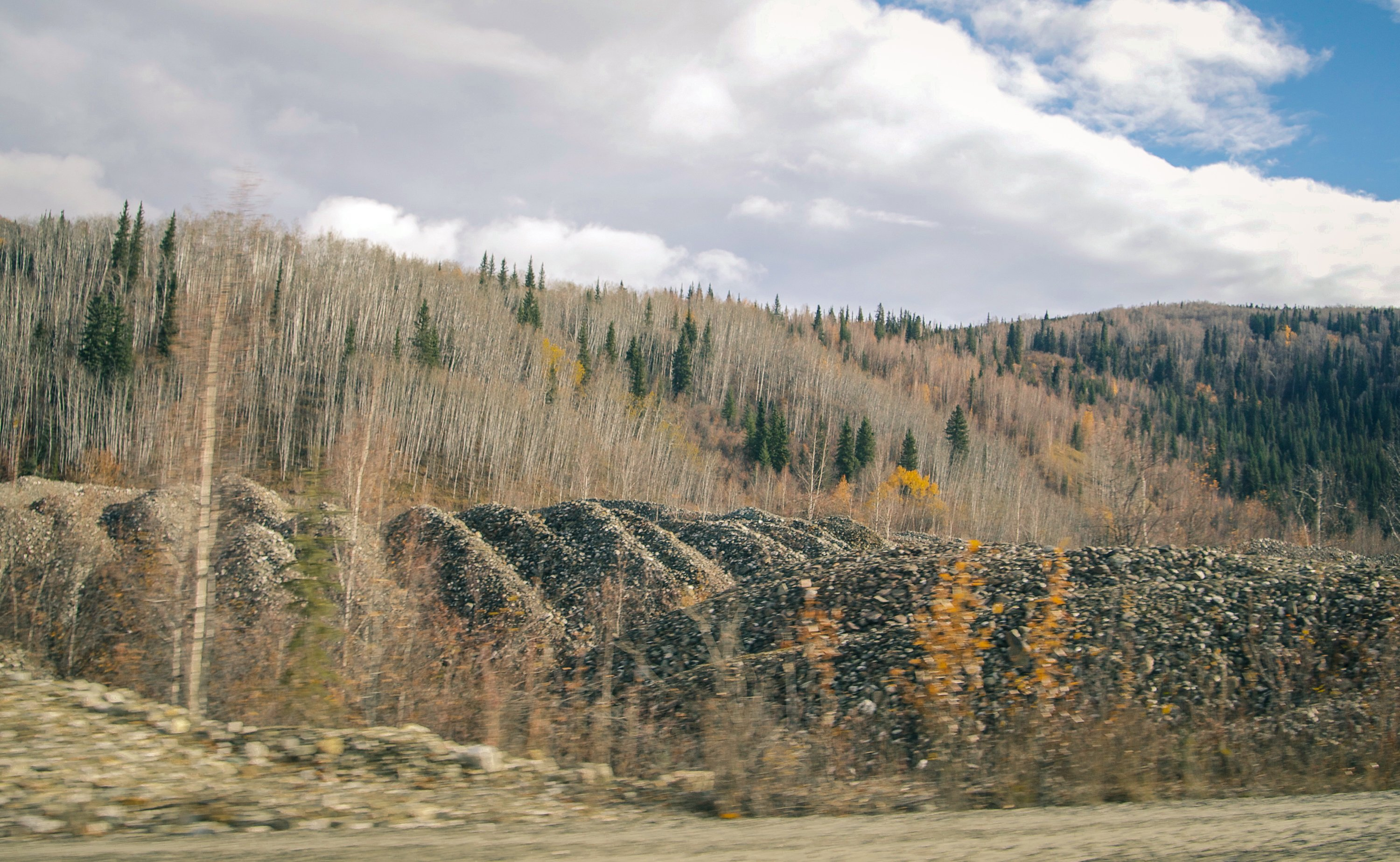 Tailings with trees growing out of them