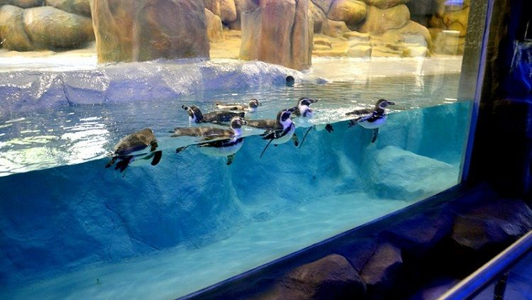 After a 7 month wait, penguin exhibit at Byculla Zoo to open for public this Saturday