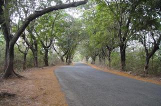 Aarey milk colony, Borivali