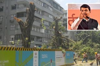 CM Devendra Fadnavis has asked MMRCL to replant 100 times more trees and ensure that those trees survive (Main Picture Courtesy: Sneha Sneh)