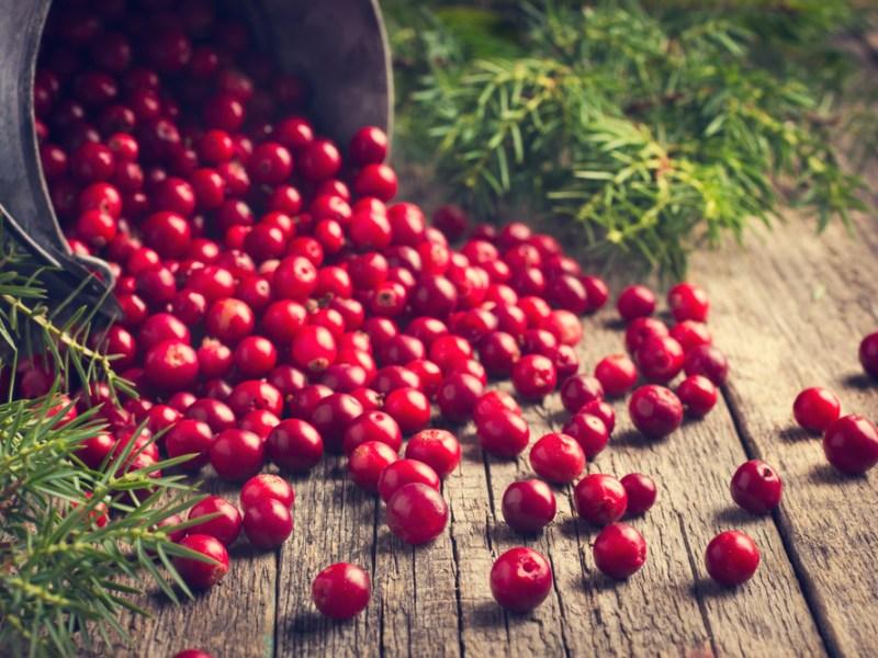 Cranberry, recipe, Plano Profile
